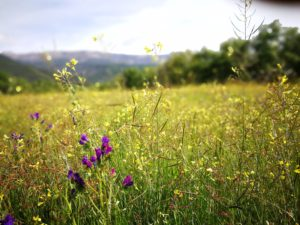 La Adrada en primavera
